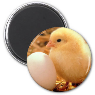 pollo imán redondo 5 cm
