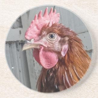 Pollo joven del gallo de Welsummer Posavasos Para Bebidas