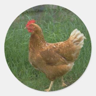 Pollo libre de la gama pegatina redonda