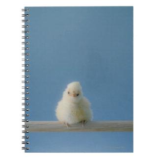 Pollo solitario del mascota del bebé que se sienta libro de apuntes con espiral