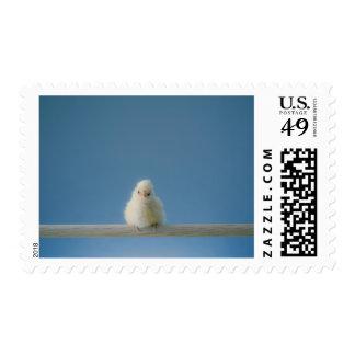 Pollo solitario del mascota del bebé que se sienta timbre postal