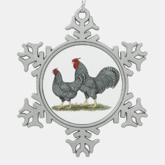Pollos de Dominique