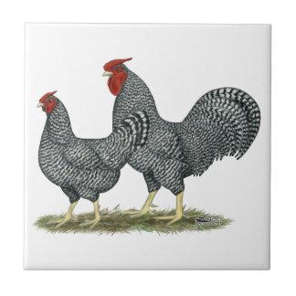 Pollos de Dominique Azulejo