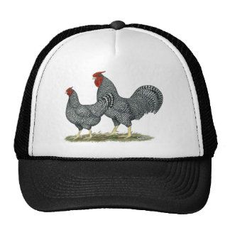 Pollos de Dominique Gorra