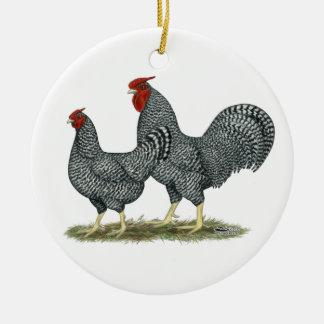 Pollos de Dominique Ornatos