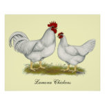 Pollos de Lamona Poster
