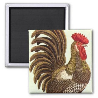 Pollos de los animales del campo del vintage, imán cuadrado