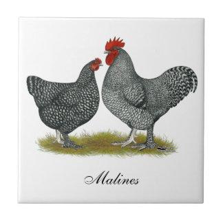 Pollos de Maline Azulejo
