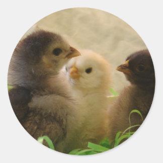 Pollos de Pascua Pegatina Redonda