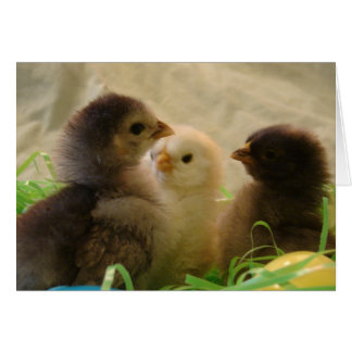 Pollos de Pascua Tarjeta De Felicitación