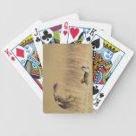 Pollos de pradera masculinos en los leks en el con cartas de juego
