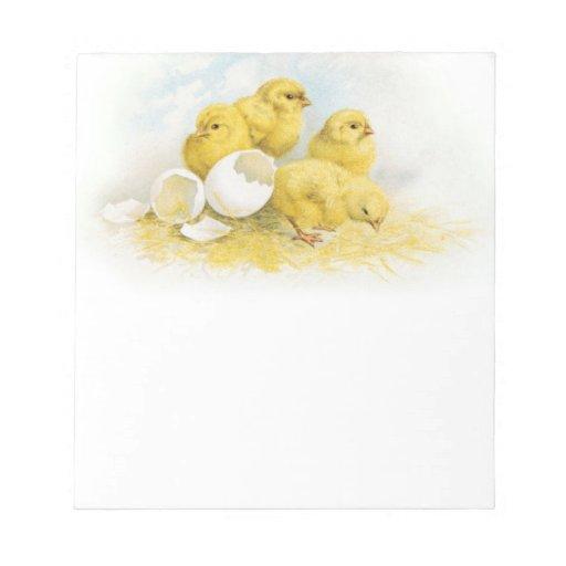Pollos del bebé del vintage bloc