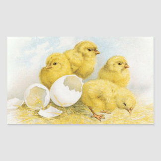 Pollos del bebé del vintage pegatina rectangular