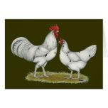 Pollos del blanco de Austra Tarjeton