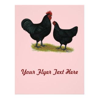 """Pollos del gigante del jersey folleto 8.5"""" x 11"""""""
