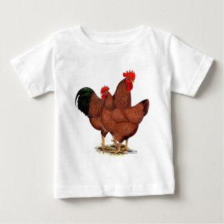 Pollos del rojo de la producción playera
