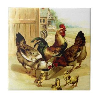Pollos gallo y polluelos azulejo cuadrado pequeño