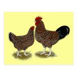 Pollos manchados de Sussex