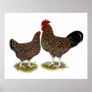 Pollos manchados de Sussex Póster
