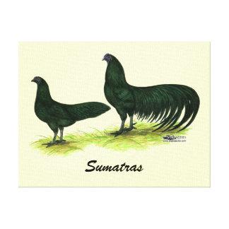 Pollos negros de Sumatra Impresiones En Lona Estiradas