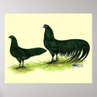 Pollos negros de Sumatra Póster
