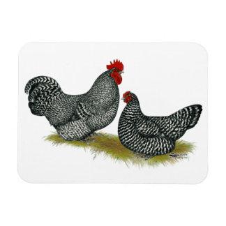 Pollos regordetes escoceses imanes de vinilo