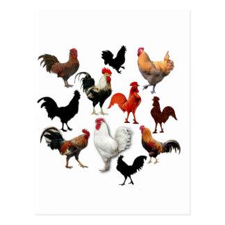 Pollos rústicos del vintage del collage del gallo postales