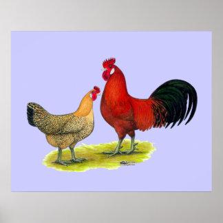 Pollos sicilianos del ranúnculo poster