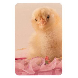 Polluelo amarillo de la niña con el volante rosado iman rectangular