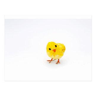 Polluelo amarillo lindo del bebé tarjeta postal