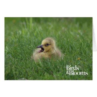 Polluelo canadiense del ganso tarjeta de felicitación