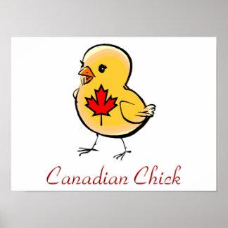 Polluelo canadiense póster