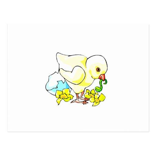 polluelo con la flor de la cáscara de huevo del gu postales