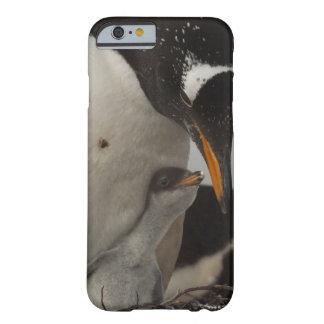 Polluelo de alimentación del pingüino de Gentoo Funda Para iPhone 6 Barely There