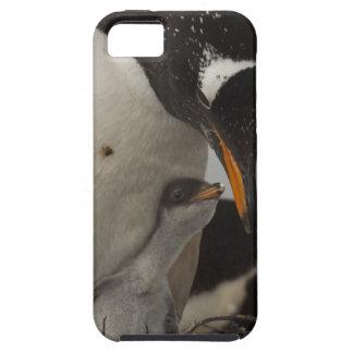 Polluelo de alimentación del pingüino de Gentoo iPhone 5 Fundas