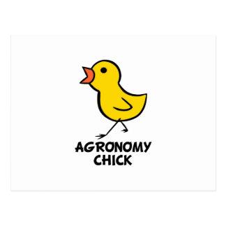 Polluelo de la agronomía tarjetas postales