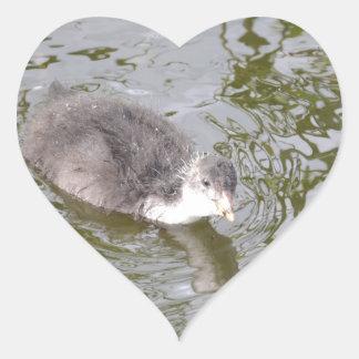 Polluelo de la focha pegatina corazón