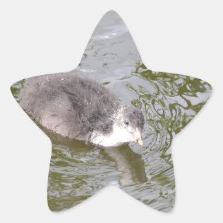 Polluelo de la focha colcomanias forma de estrella