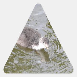 Polluelo de la focha pegatina triangular
