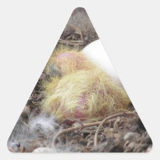 Polluelo de la paloma en la jerarquía con su huevo pegatina triangular