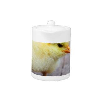Polluelo de Pascua