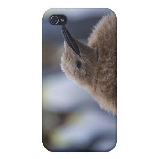 Polluelo de rey pingüino (patagonicus del Aptenody iPhone 4/4S Carcasas