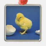 Polluelo del bebé adorno navideño cuadrado de metal