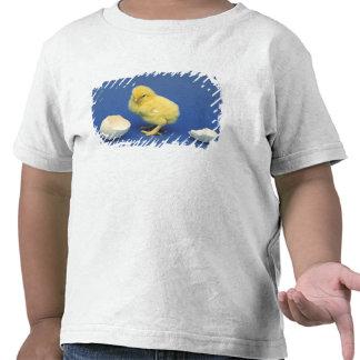Polluelo del bebé camisetas