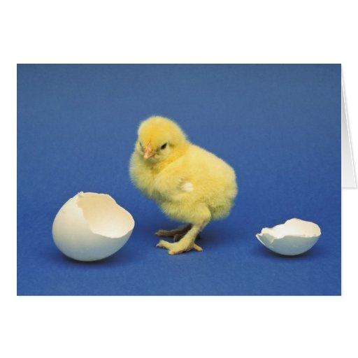 Polluelo del bebé tarjeta de felicitación