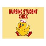 Polluelo del estudiante del oficio de enfermera tarjetas postales