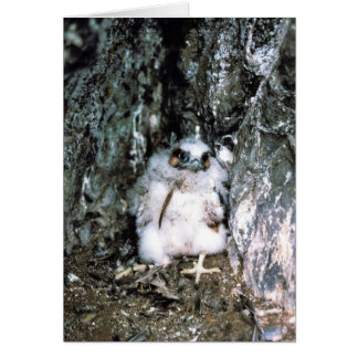 Polluelo del halcón de peregrino felicitaciones
