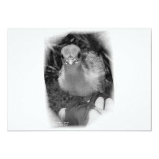 Polluelo del pavo real del bebé que se coloca en comunicados personales