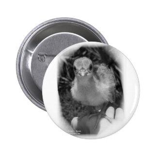 Polluelo del pavo real del bebé que se coloca en u pin