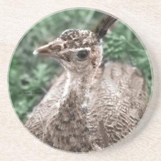 Polluelo del pavo real que se sienta en la hierba  posavasos de arenisca